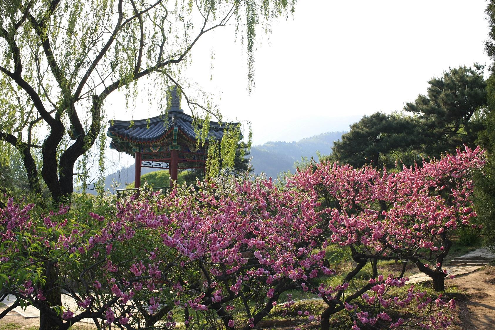 北京植物园位于北京西山脚下,1956年由国务院批准建立全园总规划面积400公顷,已建成开放游览区域200公顷,自然保护试验区200公顷。是集植物资源展示和保护、科研、科普、游憩和开发为一体的代表国家水平的、大型的综合性植物园,是北京著名的游览胜地。2001年被评为首批国家AAAA级游览景区,2002年通过ISO9000质量管理体系和ISO14000环境管理体系双认证。  北京植物园主要由植物展览区、名胜古迹游览区和樱桃沟自然保护试验区组成。植物展览区包括观赏植物区、树木园和温室花卉区三部分及试验苗圃、组培