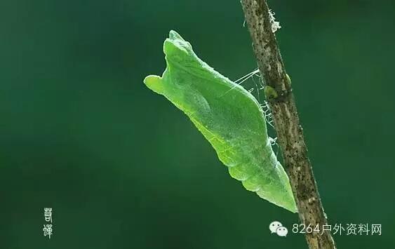 昆虫蝈蝈微信头像